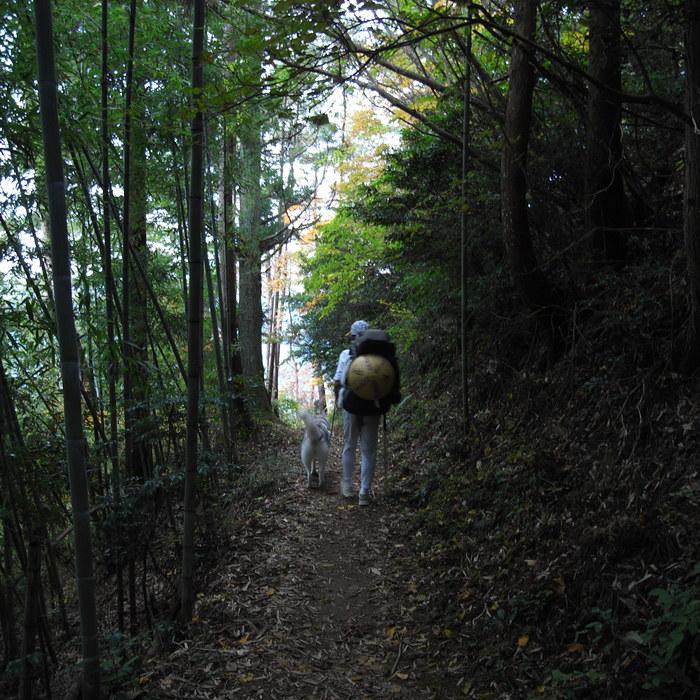 Memory of the second pilgrimage 1200km with husky HANA_c0049299_16521882.jpg