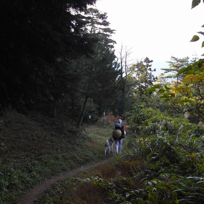 Memory of the second pilgrimage 1200km with husky HANA_c0049299_16552913.jpg