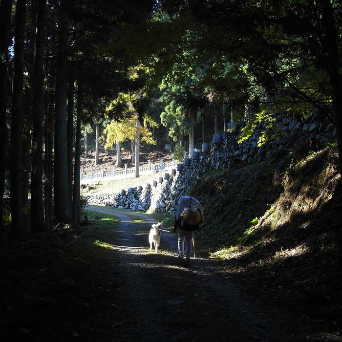 Memory of the second pilgrimage 1200km with husky HANA_c0049299_16584833.jpg