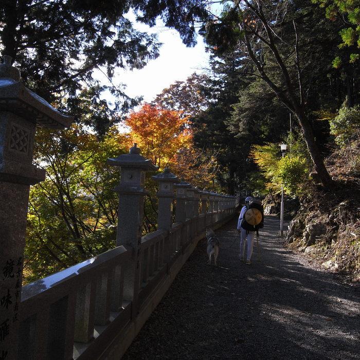 Memory of the second pilgrimage 1200km with husky HANA_c0049299_16595220.jpg