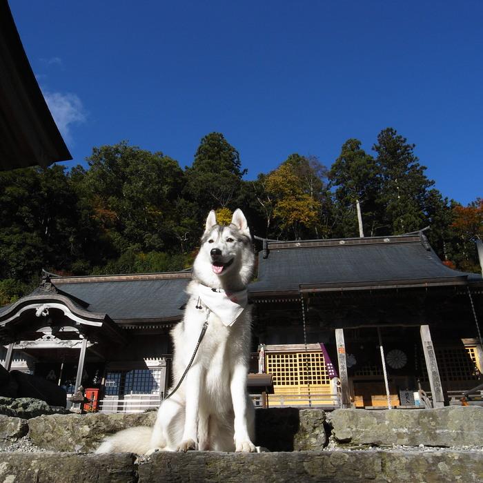 Memory of the second pilgrimage 1200km with husky HANA_c0049299_17262070.jpg
