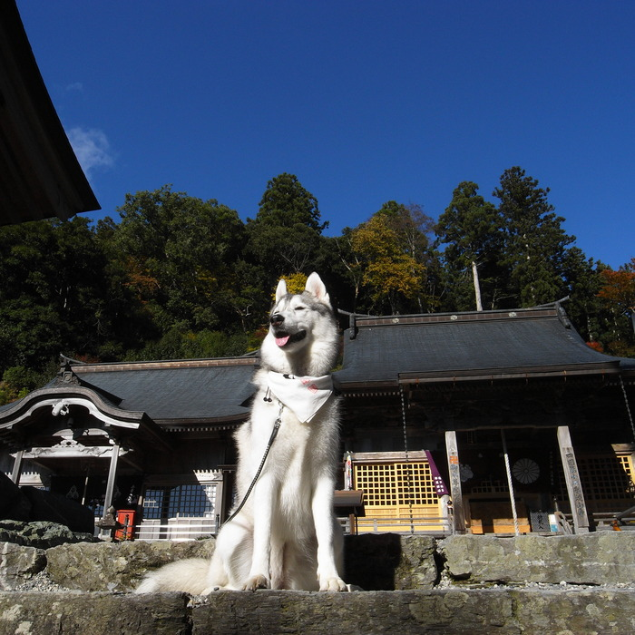Memory of the second pilgrimage 1200km with husky HANA_c0049299_17264346.jpg