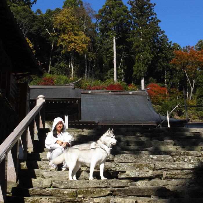 Memory of the second pilgrimage 1200km with husky HANA_c0049299_1728965.jpg