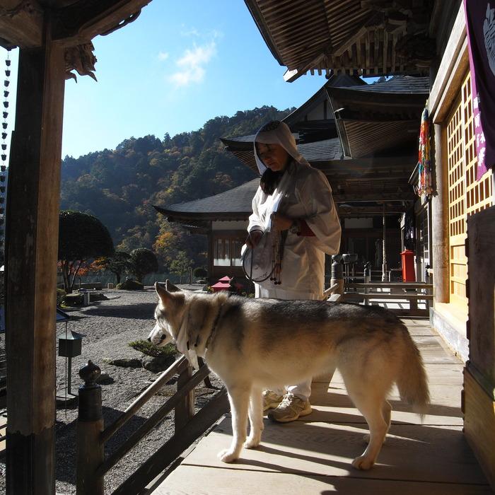 Memory of the second pilgrimage 1200km with husky HANA_c0049299_1765613.jpg