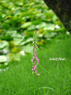 誰かを、笑顔にする花・・・_c0098807_19292382.jpg