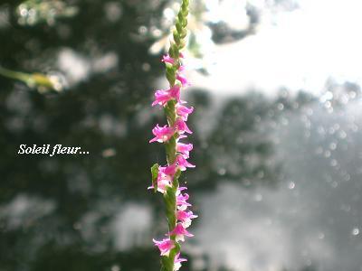 誰かを、笑顔にする花・・・_c0098807_19562116.jpg