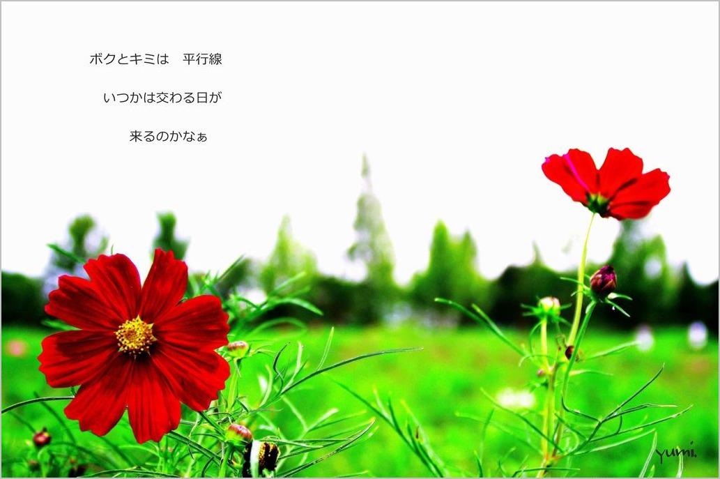 b0151508_17112255.jpg