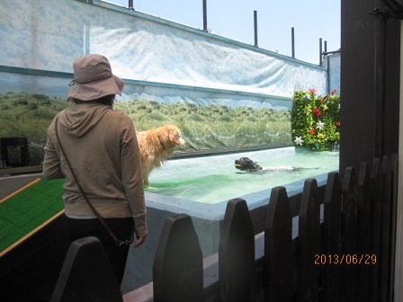 プール遊び_e0136815_106859.jpg