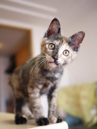 猫のお友だち ようちゃん編。_a0143140_23302423.jpg