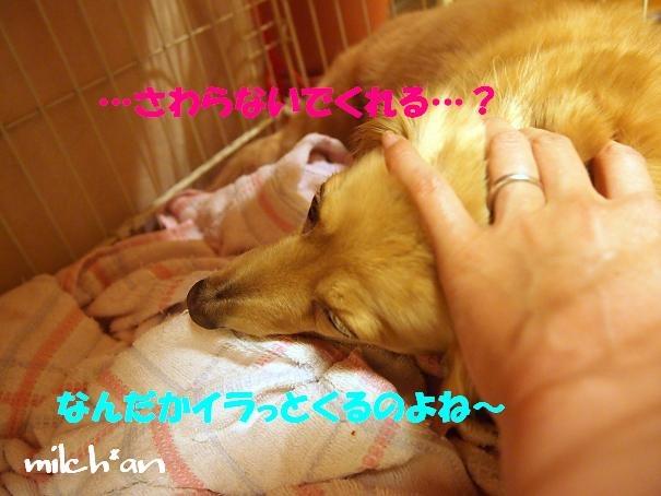 b0115642_22543431.jpg
