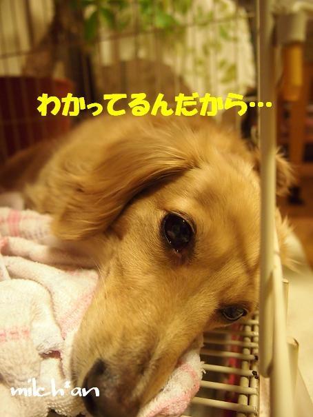b0115642_2256736.jpg