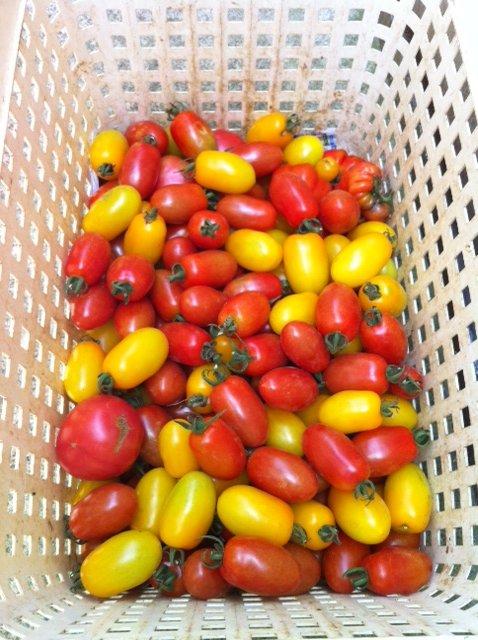 今朝はA氏&Aさん&Sさんに畑の収穫をお願いして_c0222448_15551169.jpg