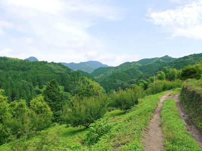 山あいの南高梅 完熟梅の出荷とお礼肥え_a0254656_17412054.jpg
