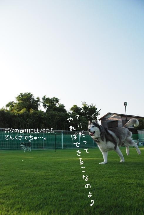 d0113080_19111089.jpg