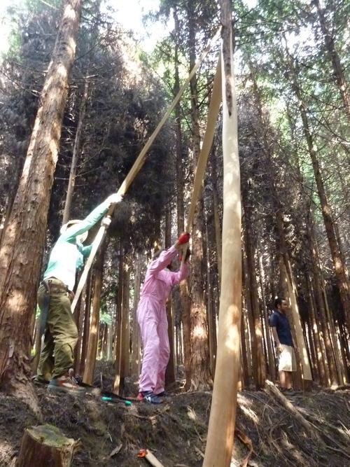 6月8日(日)「きらめ樹実習会フィナーレ&森ヨガ」のお知らせ_e0263590_1452025.jpg