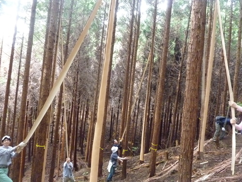 6月8日(日)「きらめ樹実習会フィナーレ&森ヨガ」のお知らせ_e0263590_1455331.jpg