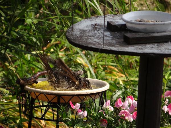 スズメの餌台、ネズミ&カラス対策2013(追記あり♪)_a0136293_19402268.jpg