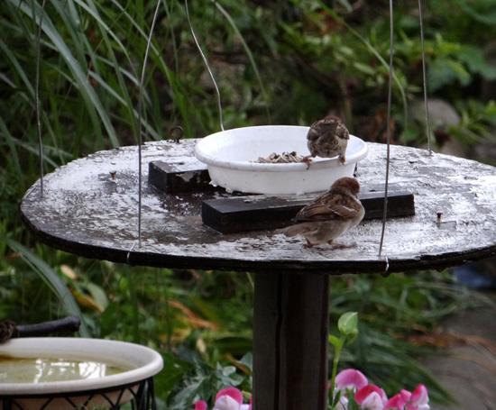 スズメの餌台、ネズミ&カラス対策2013(追記あり♪)_a0136293_19445611.jpg