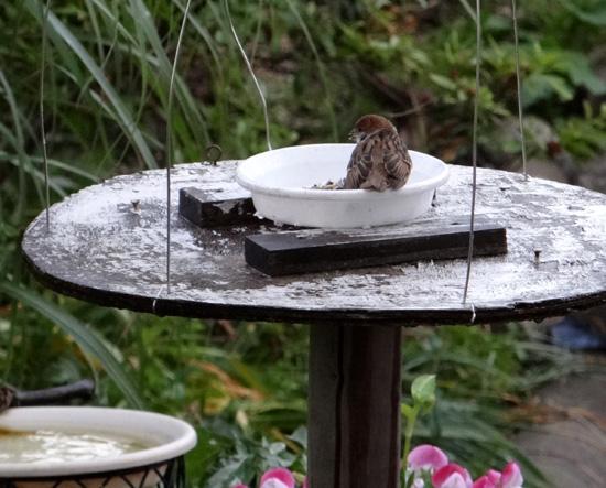 スズメの餌台、ネズミ&カラス対策2013(追記あり♪)_a0136293_1948384.jpg