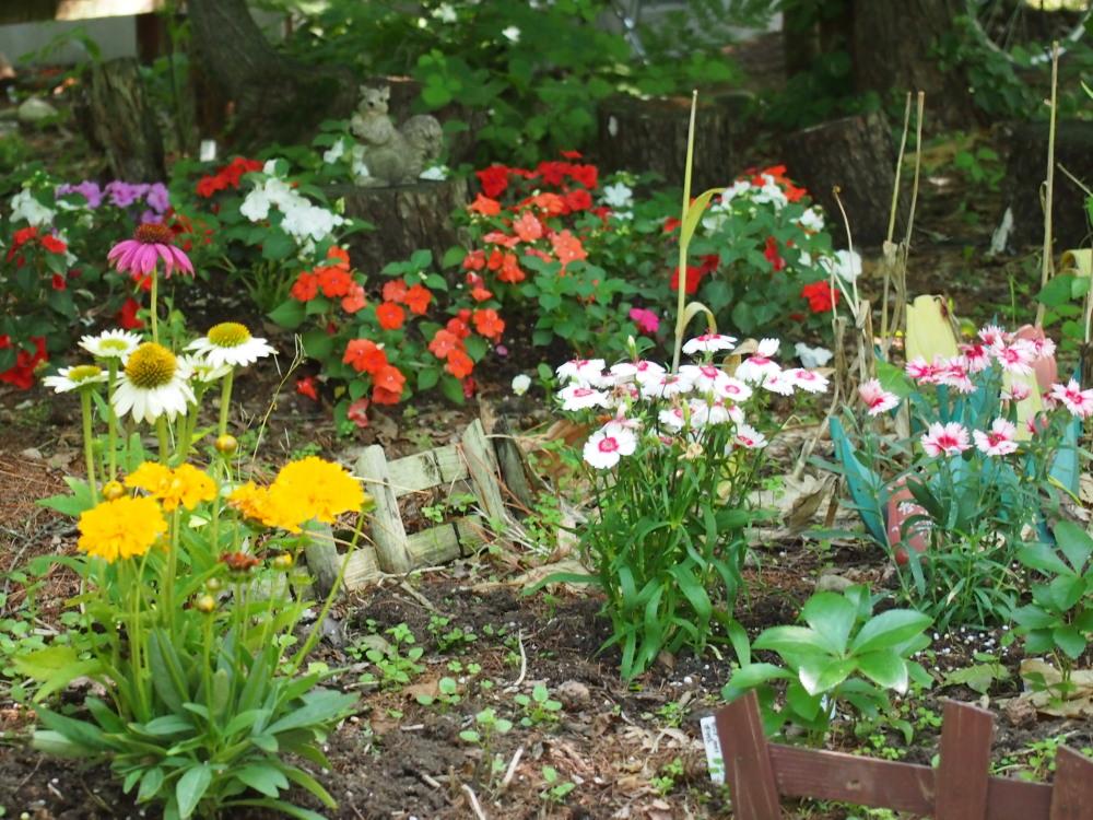 """「2013中札内花フェスタ」""""カンタベリーの庭""""造っています。(1)_f0276498_19522030.jpg"""