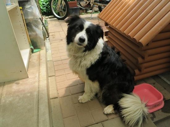 【犬】夏ですね!_f0141609_0391972.jpg