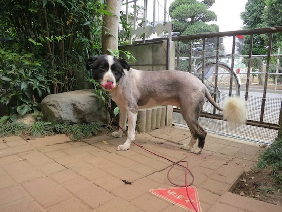 【犬】夏ですね!_f0141609_0393814.jpg