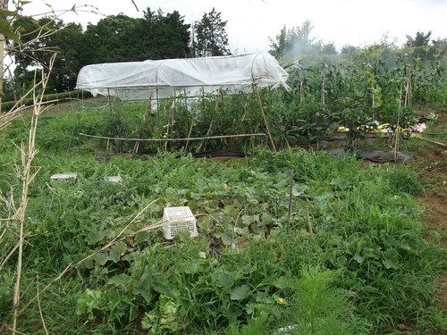 野菜畑のクリーンアップ....疲れました。_b0137932_16115831.jpg