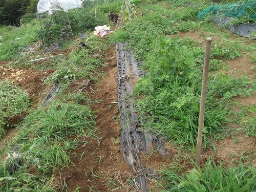野菜畑のクリーンアップ....疲れました。_b0137932_16182064.jpg