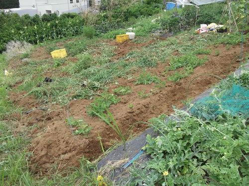 野菜畑のクリーンアップ....疲れました。_b0137932_1672294.jpg