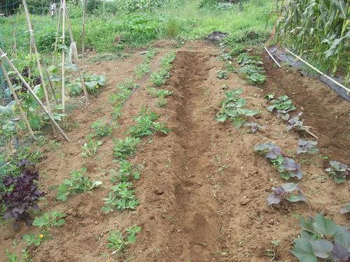 野菜畑のクリーンアップ....疲れました。_b0137932_1683131.jpg