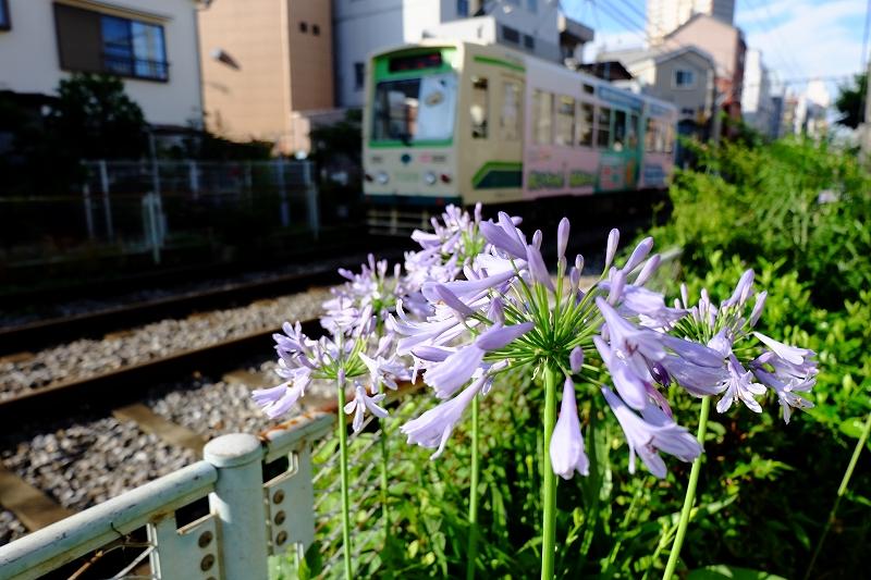 都電荒川線界隈 by  FUJIFILM X-M1_f0050534_845376.jpg