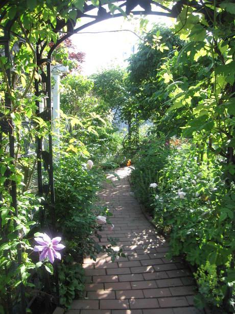 お庭が薔薇で綺麗になってきた~_a0279743_1122618.jpg