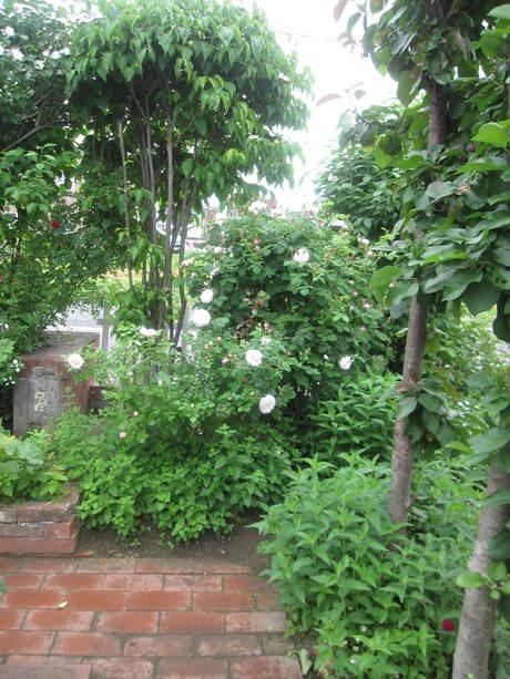 お庭が薔薇で綺麗になってきた~_a0279743_1142896.jpg