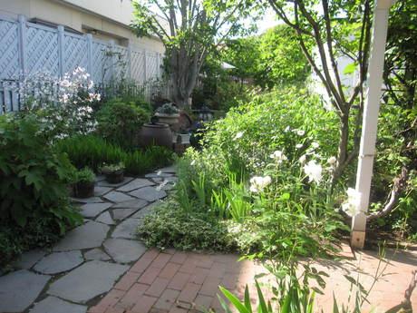 お庭が薔薇で綺麗になってきた~_a0279743_115238.jpg