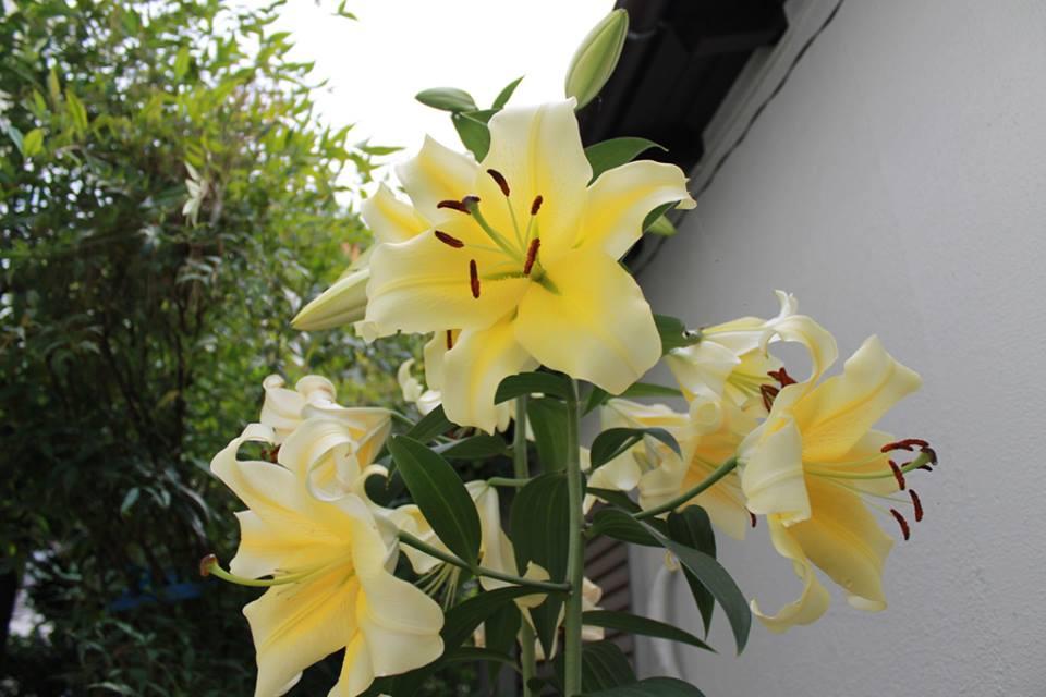 蘭香茶館の季節・収穫_f0070743_22235329.jpg