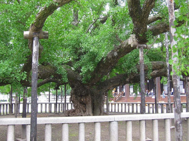 堂々たる構えの【西本願寺】には歴史がある_e0237645_23392242.jpg