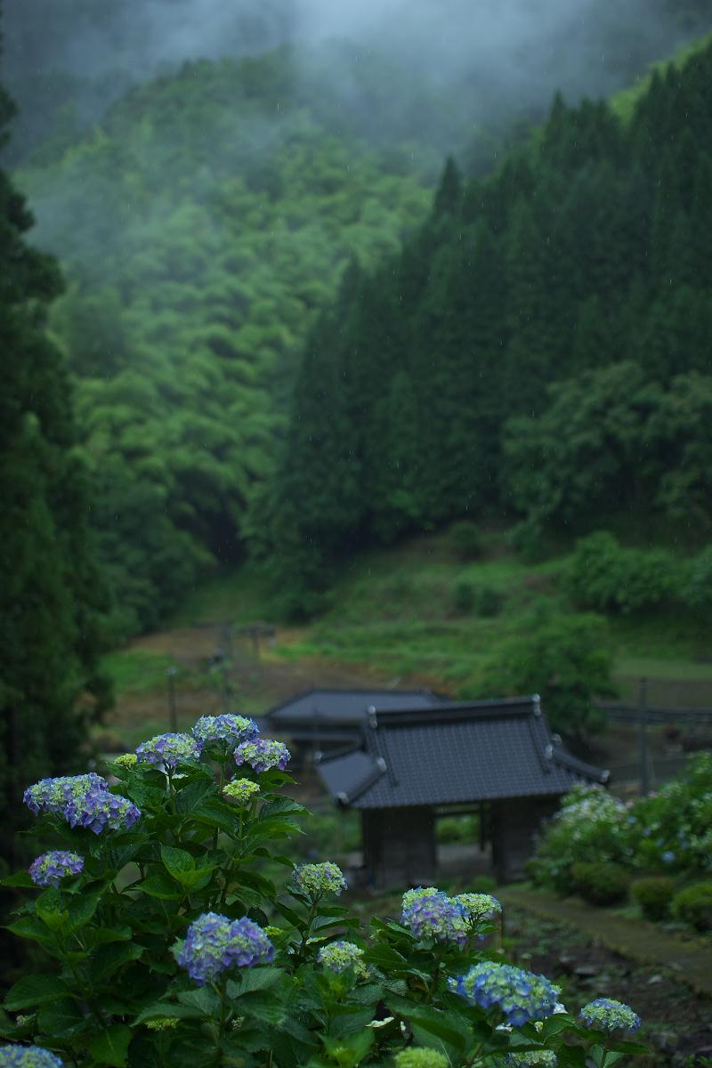 紫陽花 2013 <円満院>   _f0021869_235529.jpg