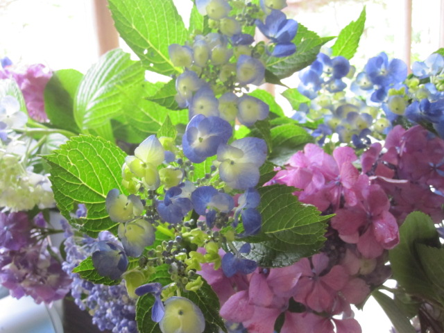紫陽花が咲いています_f0085369_21313677.jpg
