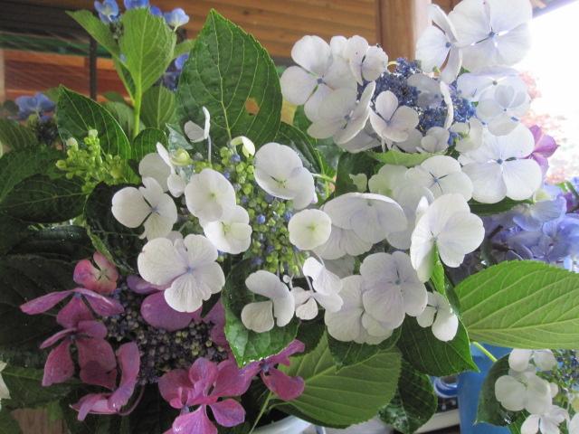 紫陽花が咲いています_f0085369_2133496.jpg