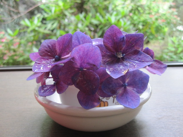 紫陽花が咲いています_f0085369_21364473.jpg