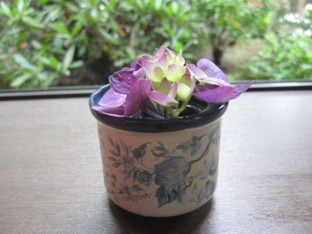 紫陽花が咲いています_f0085369_2137828.jpg