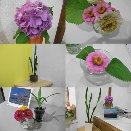 たくさんの植物_e0290029_14465736.jpg