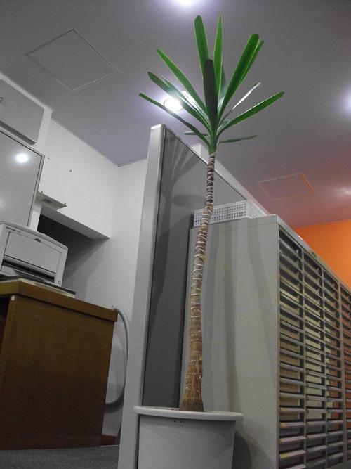 たくさんの植物_e0290029_14515496.jpg