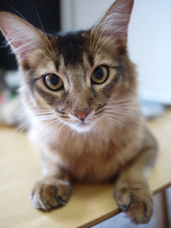 猫のお友だち ブブくん編。_a0143140_20562299.jpg