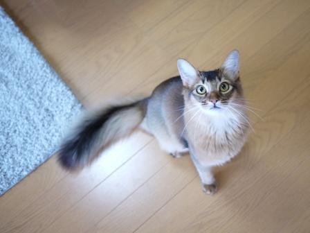 猫のお友だち ブブくん編。_a0143140_20571355.jpg