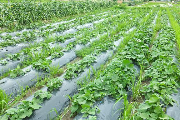 私たちの食を支えてくれている農家さん_e0272869_2345361.jpg