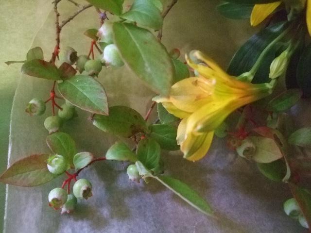 オークリーフ(ヒマワリ東北八重の花束)_f0049672_1733296.jpg