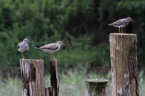 ★先週末の鳥類園(2013.6.29~30)_e0046474_18591713.jpg