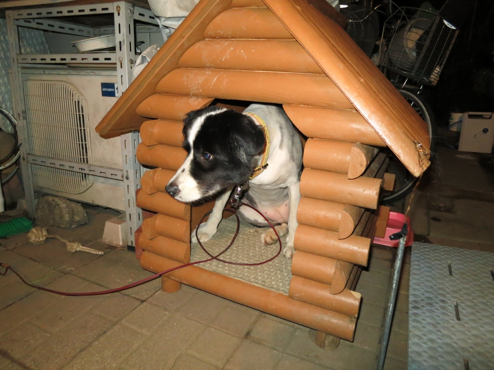 【犬】初めての!_f0141609_0241674.jpg