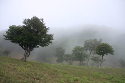 明神岳1432m ヒキウス平    三重県_d0055236_16164271.jpg